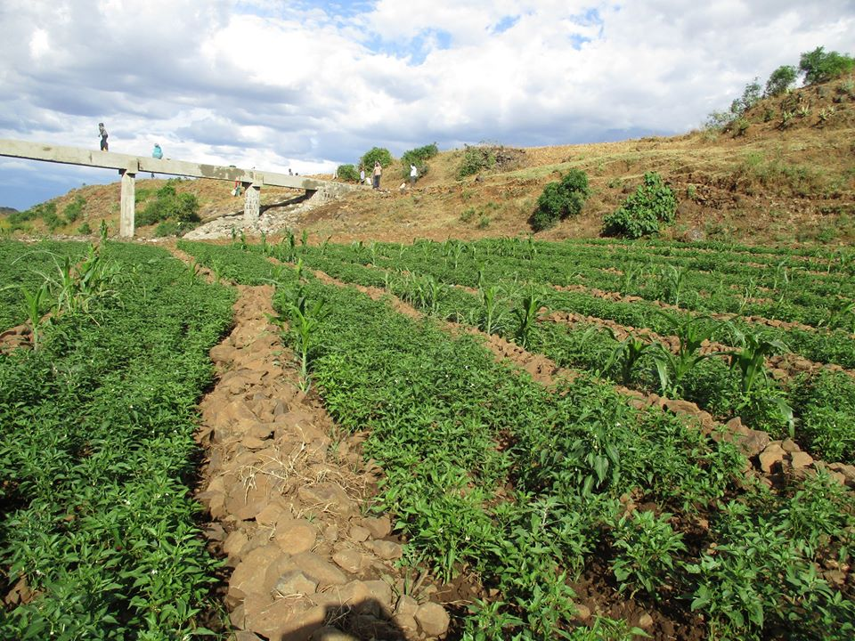 Farmers started producing crops using Deremo irrigation scheme