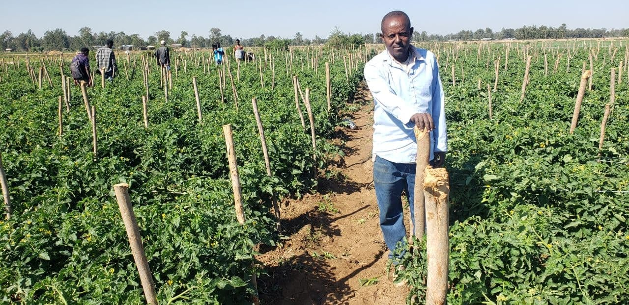 ORDA's Sustainable Vegetable Value Chain project (SVVC) is benefiting smallholder farmers
